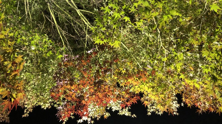 三景園のライトアップ